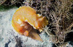 Nudibranch at Crete
